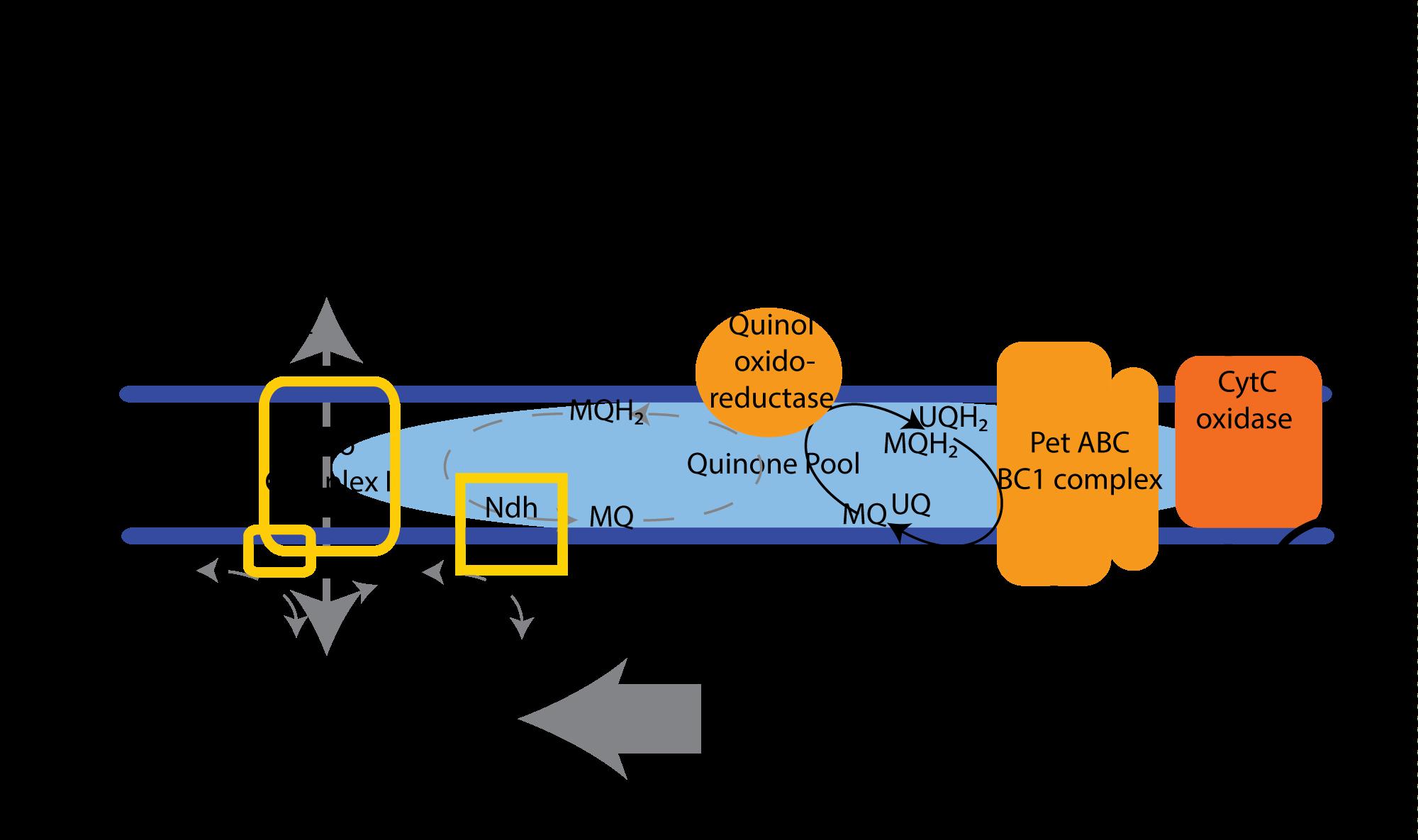 Cathode-membrane-scematic