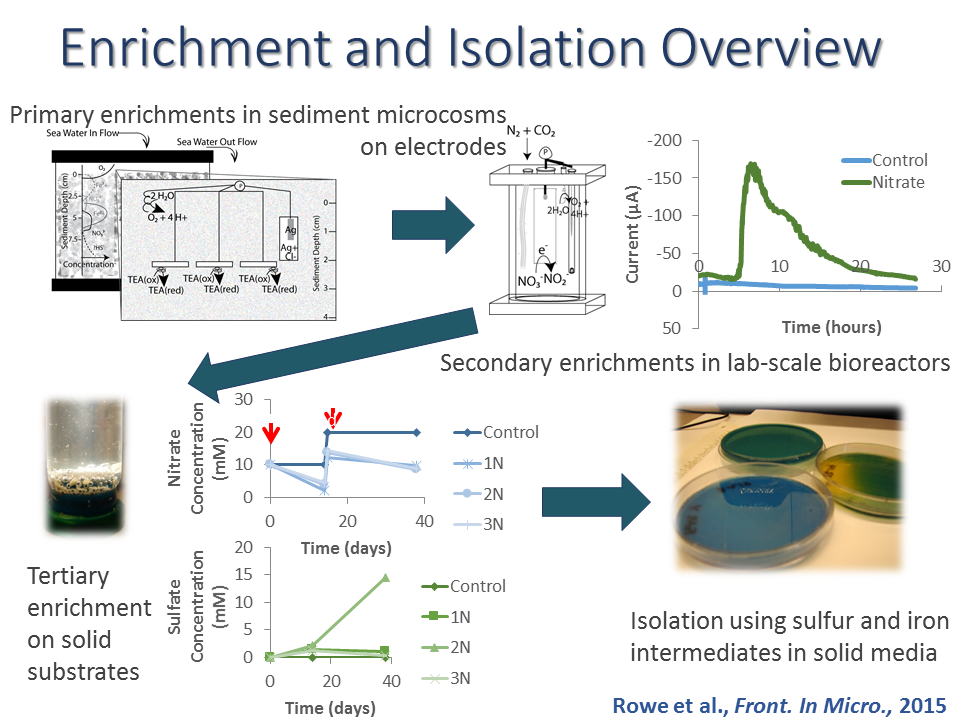 Enrichment and Isolation Overview